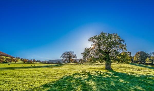 Drzewo, rosnące na polanie. Krajobraz na tle błękitnego nieba i drzew w oddali.
