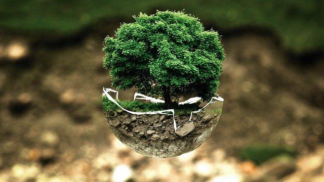 Miniaturowe drzewo, rosnące w ziemi, w szklanej, rozbitej doniczce. Drzewo jest na pierwszym planie, w tle widać glebę porośniętą mchem.