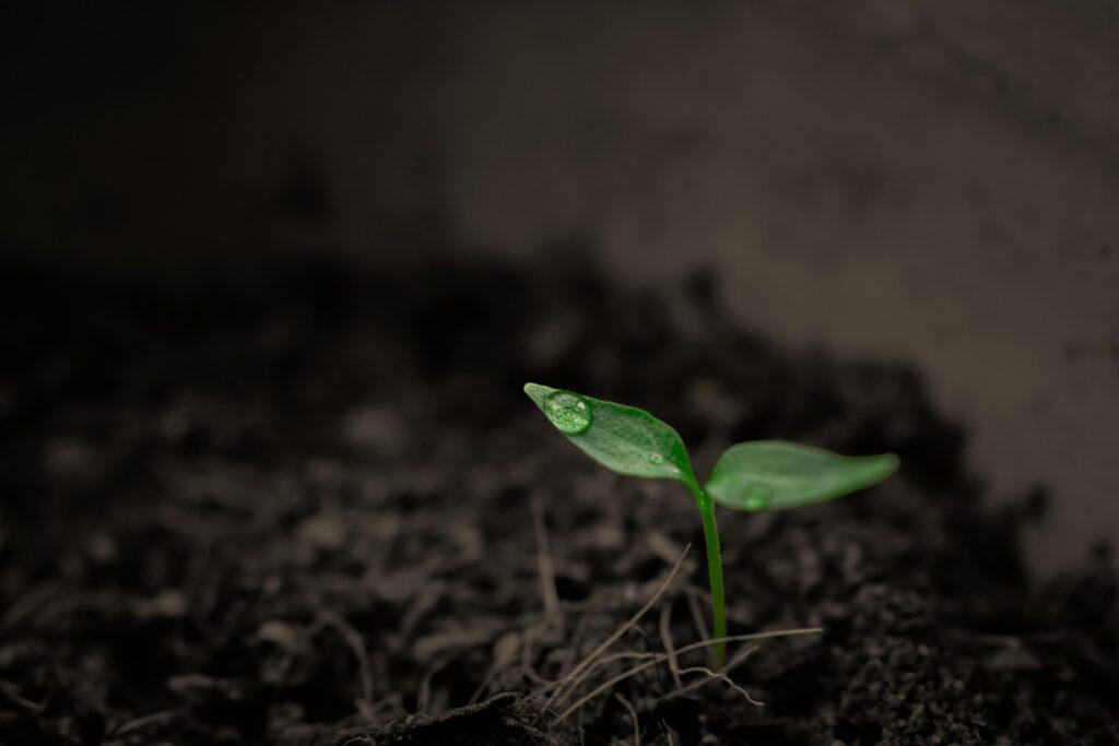 Gleba, z której wyrasta pojedyncza, mała, zielona roślinka.